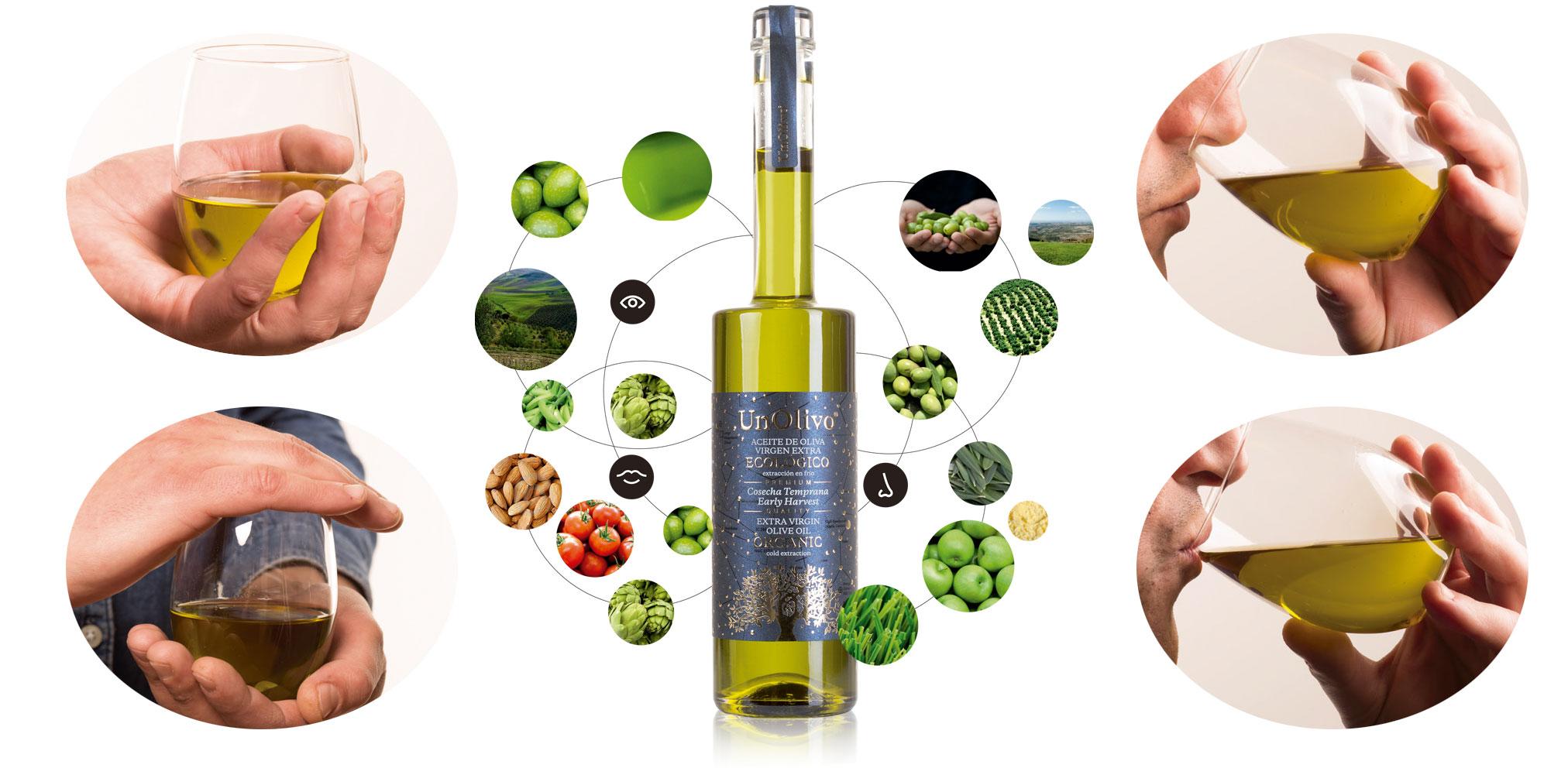 Guía de cata de aceite de oliva temprano